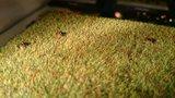 Busch-5483-Bewegende-Mollen