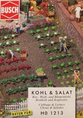 Kool en Salade