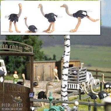 4 Struisvogels