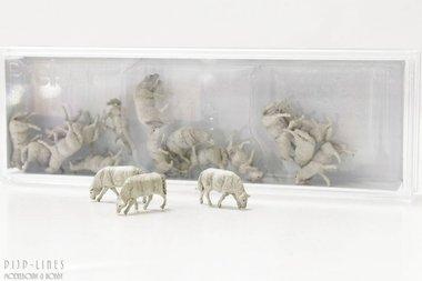 18 schapen