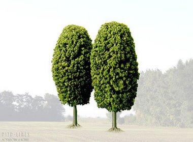 Twee loofbomen