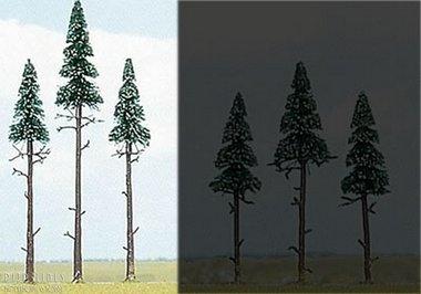 Drie hoge naaldbomen