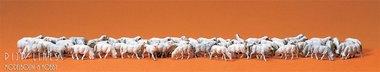 60 schapen